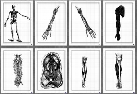 マリアグリッド 人体への展開シート ver.0