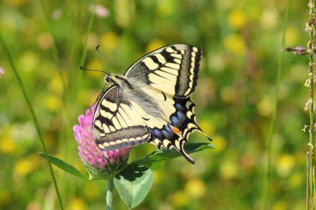 蝶は非常に霊的な動物かもしれない